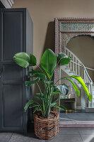 Zimmerpflanze vor angelegtem Spiegel in der Diele