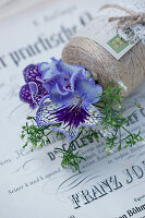 Purple Cape primrose flowers and dwarf gypsophila in reel of thread