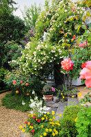 Rambler rose 'Ghislaine de Feligonde' on the house wall