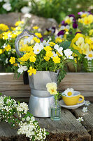 A bouquet of buttercups and horned violets in an espresso pot