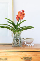 Orange Vanda orchid on glass vase without soil