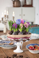 Cake-shaped arrangement of flowering hyacinths on cake stand