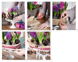 Instruction for making cake-shaped arrangement of hyacinths