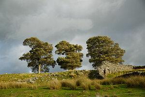 Three trees under cloudy sky
