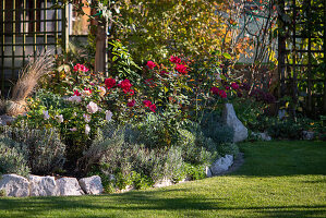 Rose bed with lavender