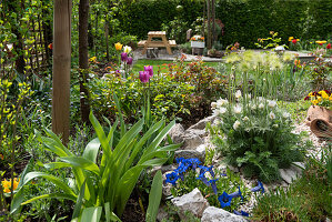 Spring in the allotment garden with pasque flower, spring gentian, tulips and roses