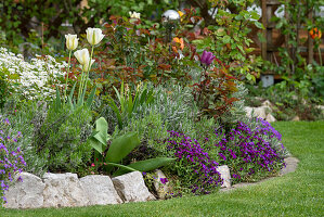 Spring bed with blue cushions, tulips, lavender and roses