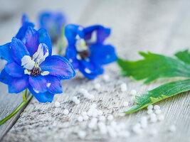 Blaue Blüte von Rittersporn auf Holzuntergrund