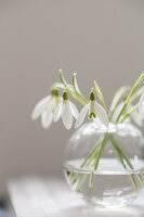 A small glass vase of snowdrops