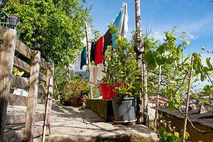 Clothesline in a garden, in the vineyards above Vernazza, Cinque Terre, Italy