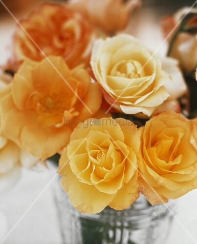 Aufgeblühte gelbe Rosen