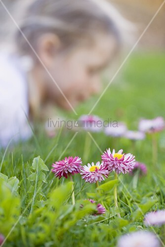 Gänseblümchen auf der Wiese, Kind im Hintergrund