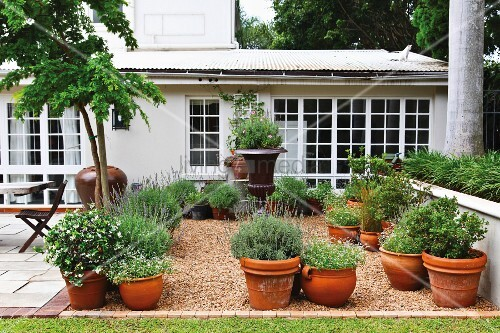 Plants growing in clay pots in a garden