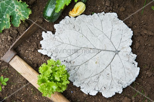 Garden stepping stone shaped like a rhubarb leaf in vegetable patch