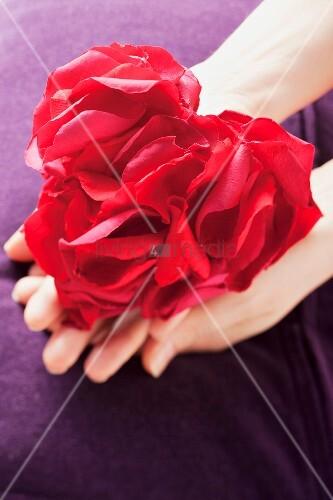 Ein Herz aus Rosenblütenblätter in Frauenhänden
