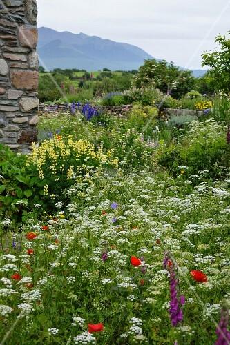 Corner of rustic Italian farmhouse with wild flower garden
