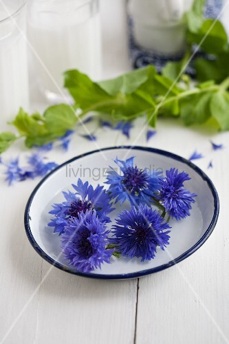 Wreath of cornflowers in enamel dish in front of sweet pea tendrils and glasses of milk