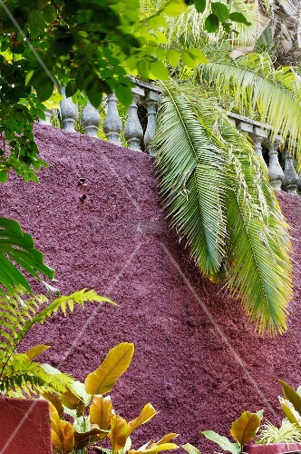 Palm leaves dangling over balustrade on top of wall painted matt purple