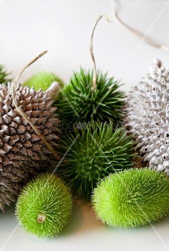 Verschiedenene Früchte mit Stacheln auf weisser Ablage
