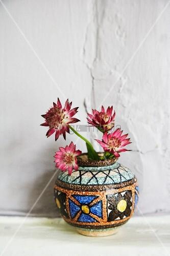 Sterndolde (Astrantia - Hattie's pincushion) in Keramikvase vor weißer Wand