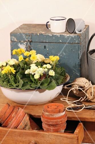 Tonöpfe in offener Schublade und Schüssel mit Frühlingsblumen vor Vintage Truhe