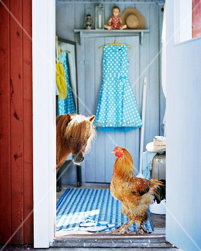 Chicken and pony walking through foyer of rustic wooden house