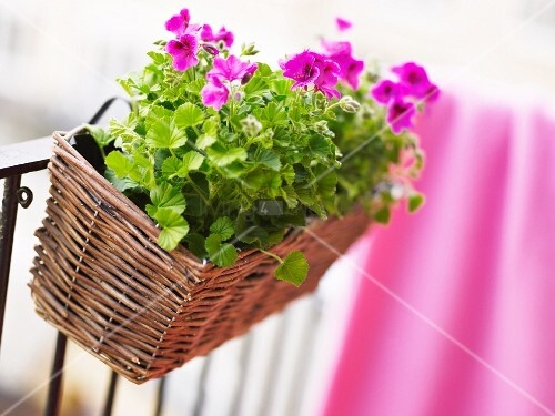 Flowers on a balcony, close-up.