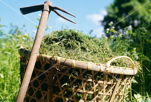 Basket filled with hay and two-pronged hoe
