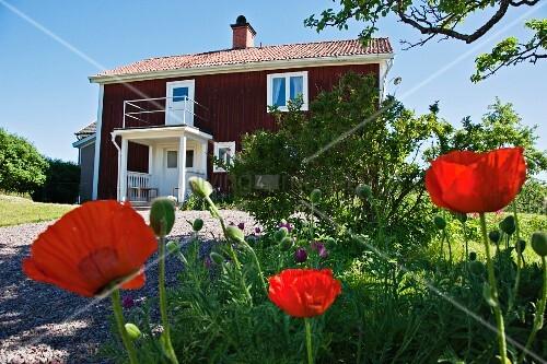blick ber roten klatschmohn und kiesweg auf rotes schwedisches holzhaus unter blauem himmel. Black Bedroom Furniture Sets. Home Design Ideas