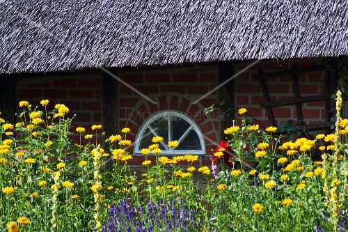 Flower bed outside thatched house