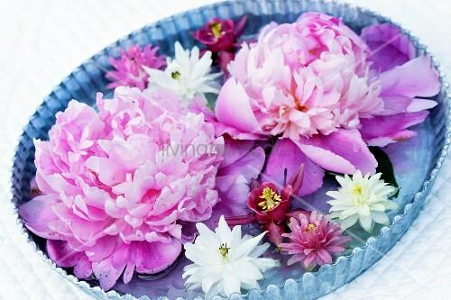 Peonies & aquilegia flowers floating in bowl of water