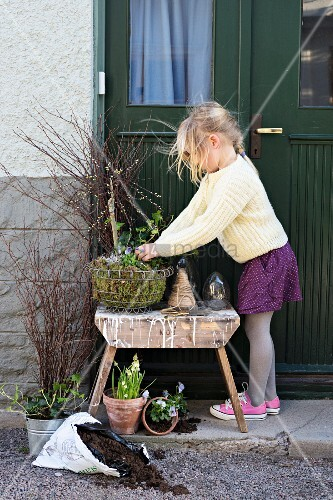 Mädchen beim Einpflanzen eines Drahtkorb-Gestecks mit Weidenkätzchen und Frühlingsblumen
