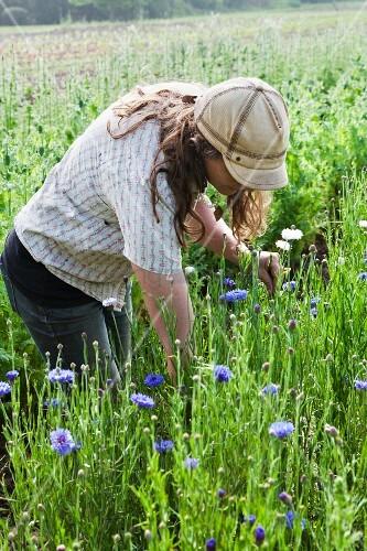 Bäuerin schneidet Blumen auf dem Feld