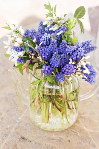 Blue grape hyacinths in glass teapot