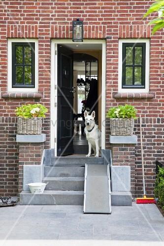 betonierte treppe vor hauseingang mit ziegelfassade in offener t r hund bild kaufen. Black Bedroom Furniture Sets. Home Design Ideas