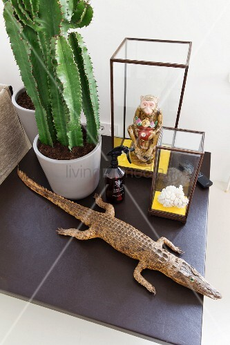 Still-life arrangement of stuffed crocodile, miniature glass cases and potted cactus on black tile