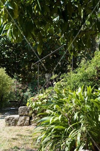 Antritt einer Steintreppe mit eisernem Handlauf in dicht bewachsenem, mediterranem Garten