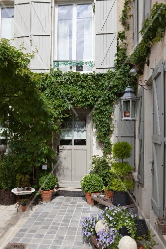 Potted plants in paved courtyard and climber-covered façade of restored country house with grey shutters