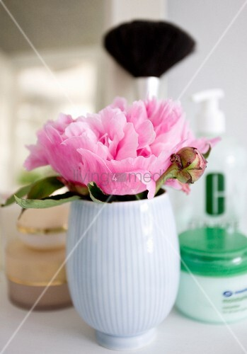 Pink peony in white china vase