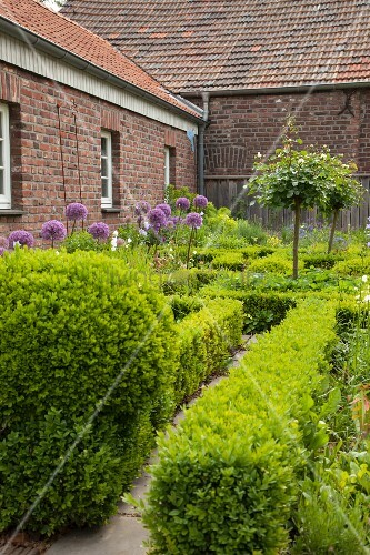 Half-height clipped hedges and box balls in garden of brick farmhouse
