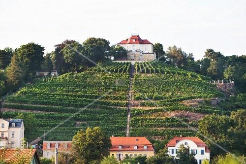 Weingut (Schloss friedstein in Radebeul) von Martin Schwarz und Grit Geißler