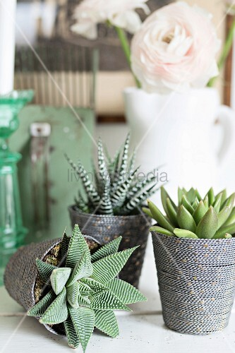 Still-life arrangement of succulents in pots decorated with cords and vase of white flowers in background