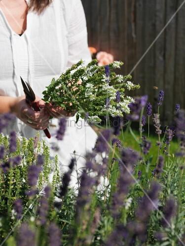 Woman holding flowering herbs in garden