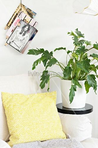 Gelb-weiss gemustertes Kissen auf Sessel, daneben Zimmerpflanze auf schwarzem Blumenständer