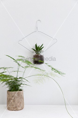 House plants hung from wire coat hangers