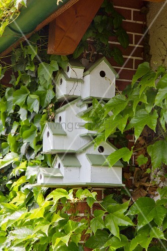 Bird nesting box complex painted white and green attached to climber-covered wall