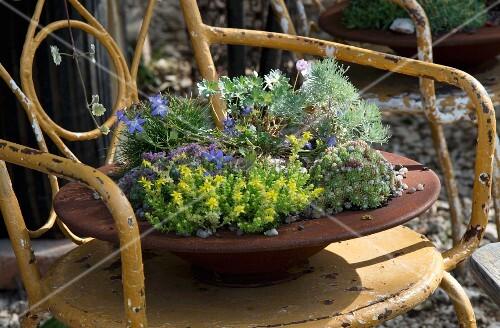 Bepflanzte, rostige Schale auf Metallstuhl mit abblätternder Farbe im Garten
