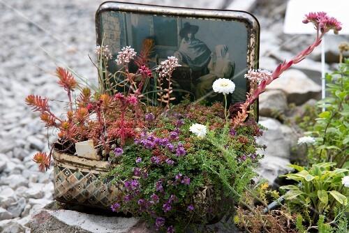 Bepflanzter Vintage Koffer im Garten