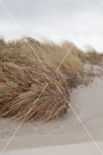 Grasbüscheln an Sandstrand