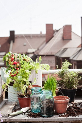 Vegetable plants, herbs and planters on potting bench on roof terrace